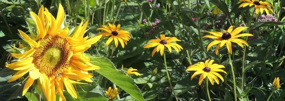 Contact Plot Garden Design